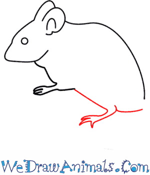 Drawn rodent step by step Mouse Tutorial How A Draw