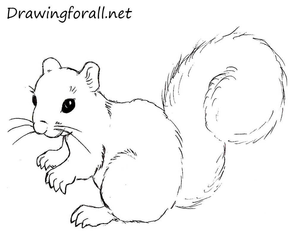 Drawn rodent step by step To Draw to Squirrel Draw