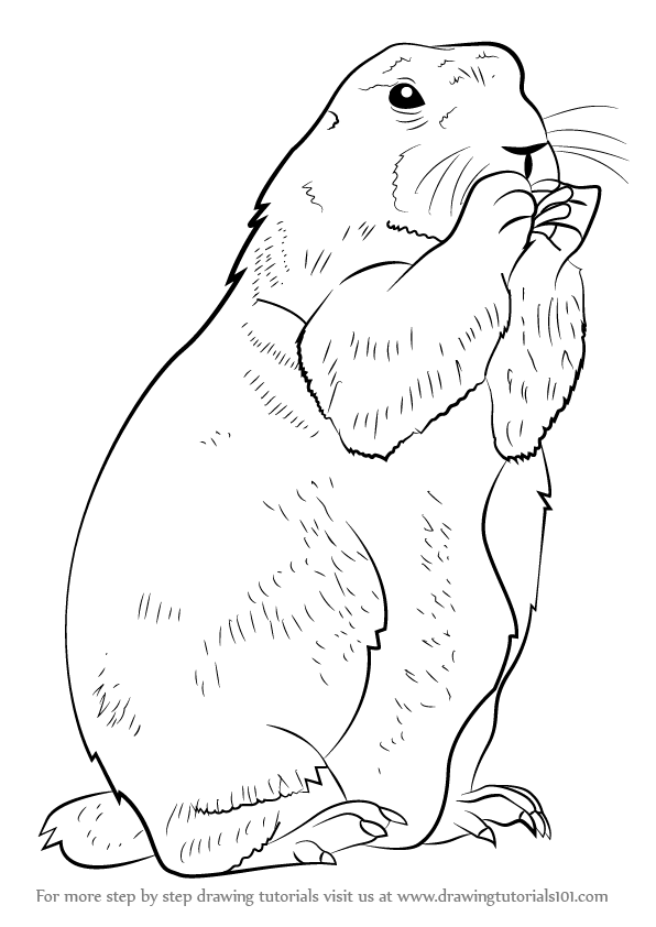 Drawn rodent step by step Rodents Drawing to com Step