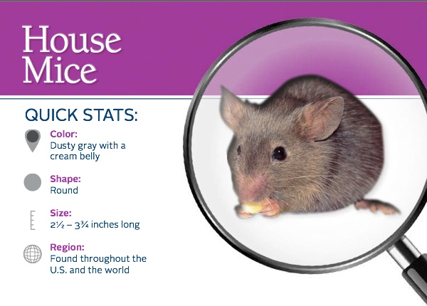 Drawn rodent the house meme Mice house about Facts Rodents: