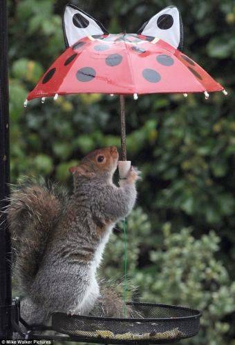 Drawn rodent umbrellas More Pinterest 47 images Rain