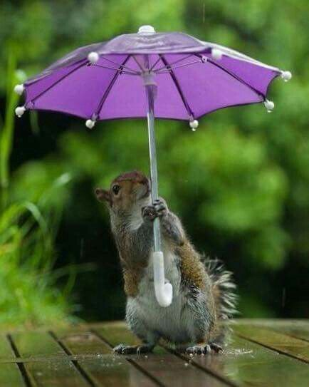 Drawn rodent umbrellas Find and images about on