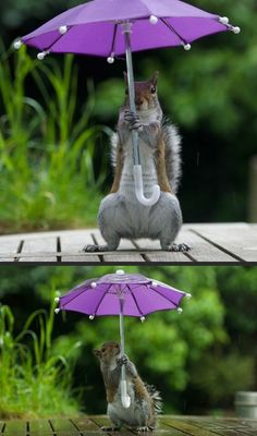 Drawn rodent umbrellas Art Squirrel holding of a