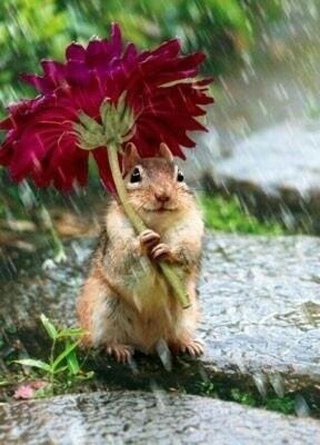 Drawn rodent umbrellas Rodent Pinterest 39 images Rodents