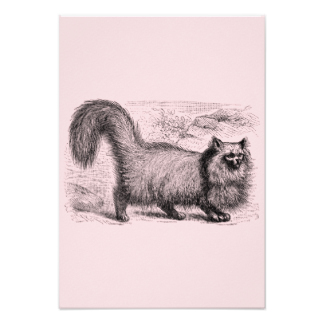 Drawn rodent vintage cat & Announcements 1800s Vintage Retro