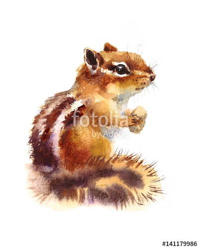 Drawn rodent white background Eating Animal Illustration isolated Hand