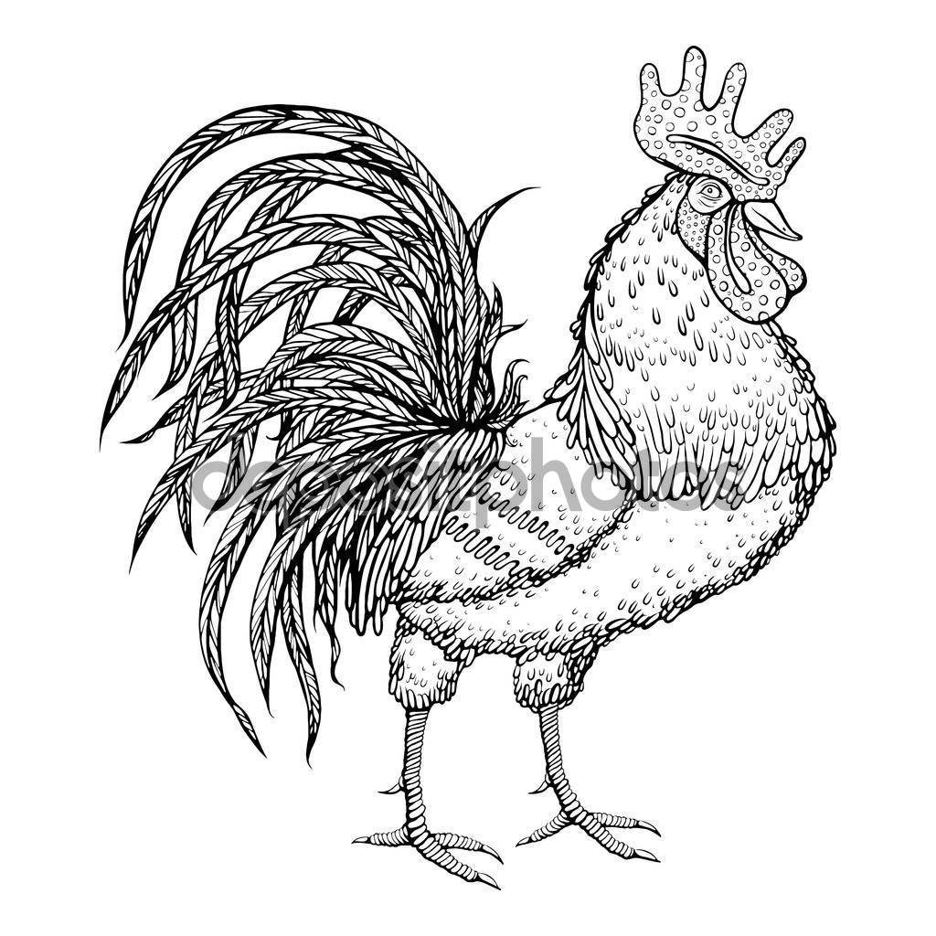 Drawn rooster Rooster Oriental white Oriental background