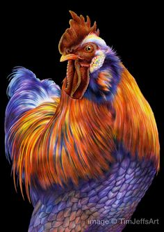 Drawn rooster colored pencil #11