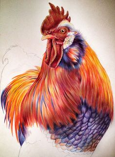 Drawn rooster colored pencil #7