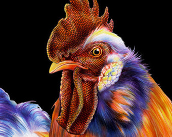 Drawn rooster colored pencil #13