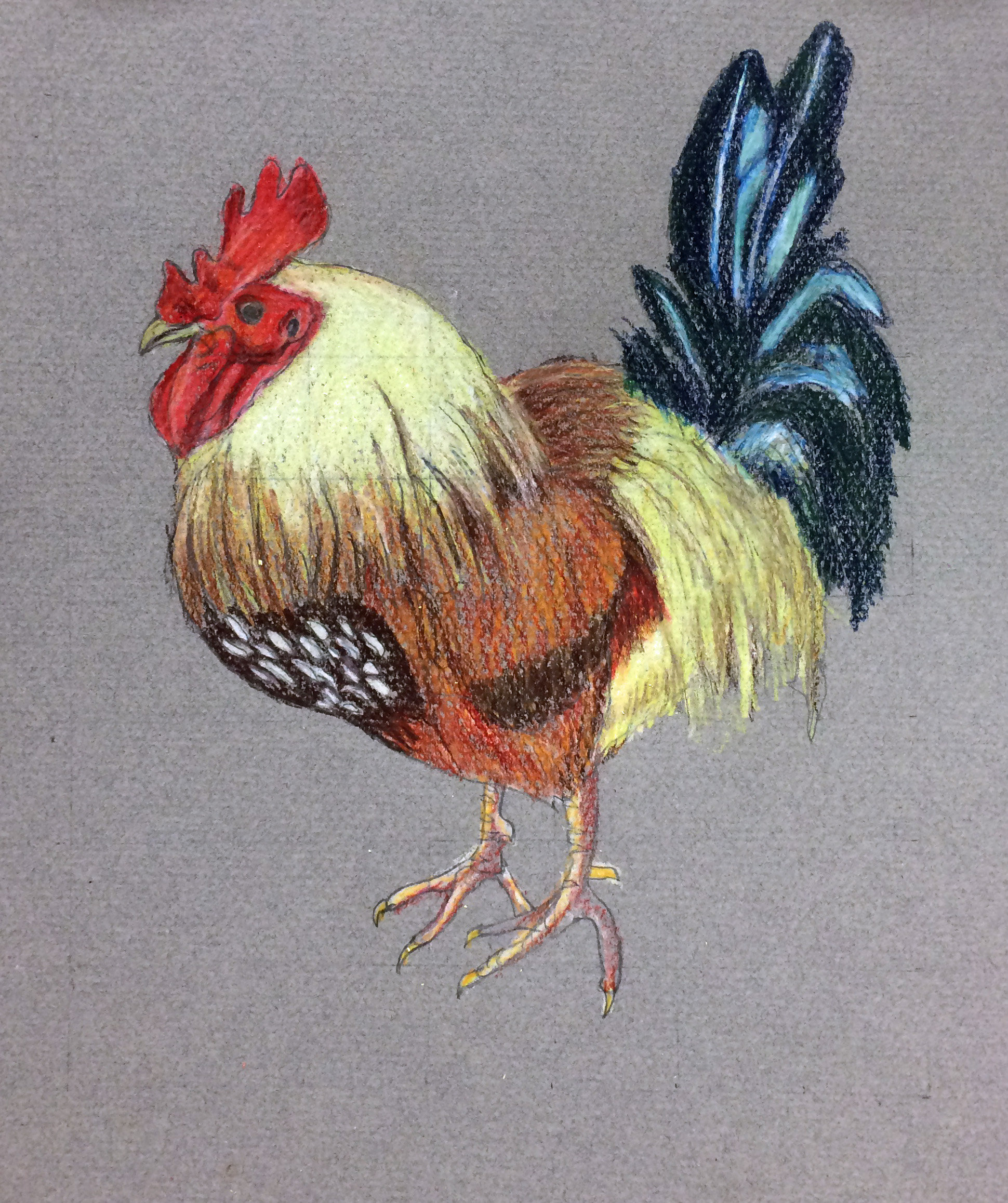 Drawn rooster colored pencil #8