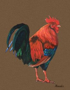 Drawn rooster colored pencil #3