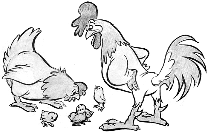 Drawn rooster hen To Cartoon Chickens Hen How