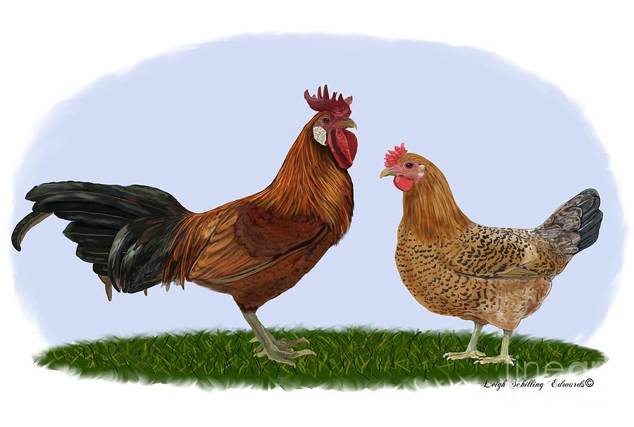 Drawn rooster hen And Drawing by Rooster Drawing