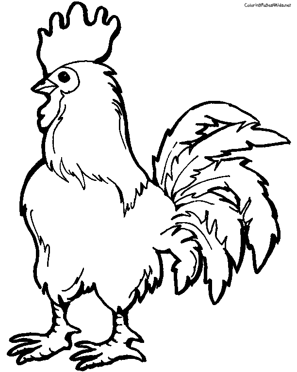 Drawn rooster kid Animal Rooster 5  Page