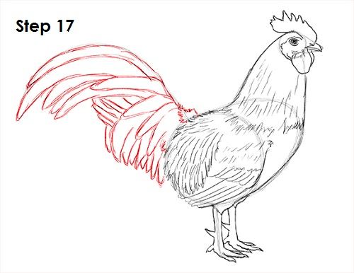 Drawn rooster line drawing #7