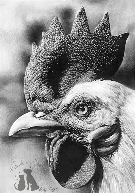 Drawn rooster realistic View Realistic Side Head Drawing