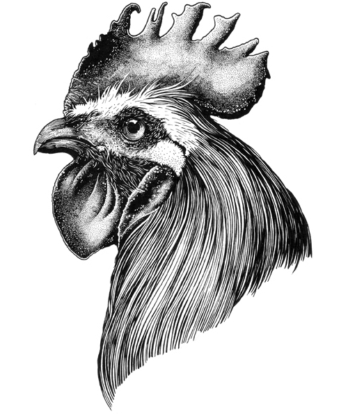 Drawn rooster realistic Ink Muthahari Detailed and Beautifully