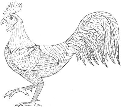 Drawn rooster realistic Amazing figure an on Color