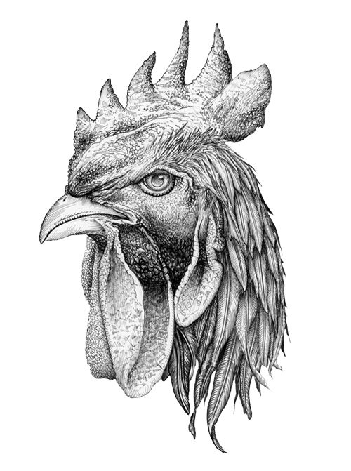 Drawn rooster rooster head 9 ink Daniella Pen best