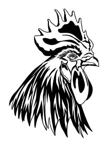 Drawn rooster rooster head Fighting Drawing head Rooster Rooster