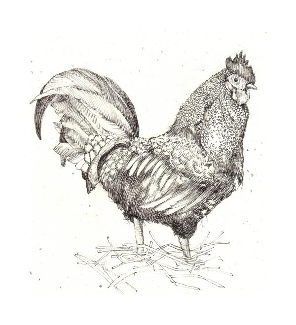 Drawn rooster sketch A Pinterest drawing cockerel of