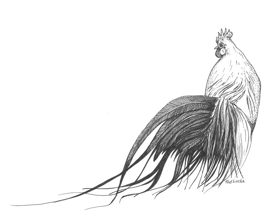 Drawn rooster sketch Rooster Pencil Images Realistic Rooster