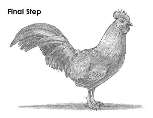 Drawn rooster sketch How a to Draw Rooster