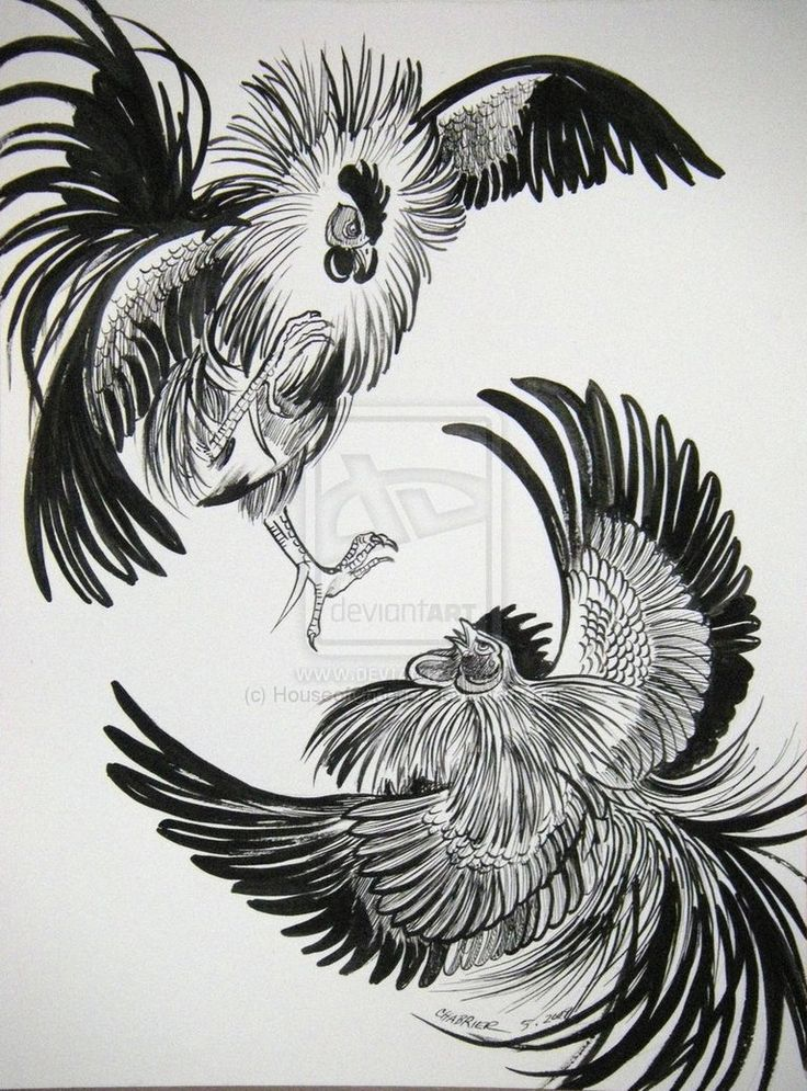 Drawn rooster thai Chicken Search Rooster ideas fighting