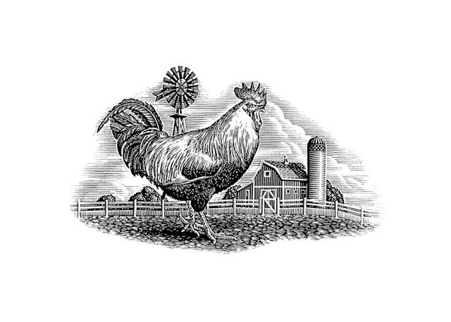 Drawn rooster woodcut #8