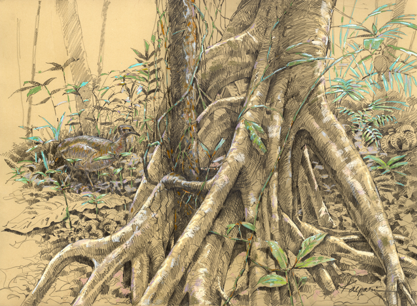 Drawn roots – Panama Plein Plein The