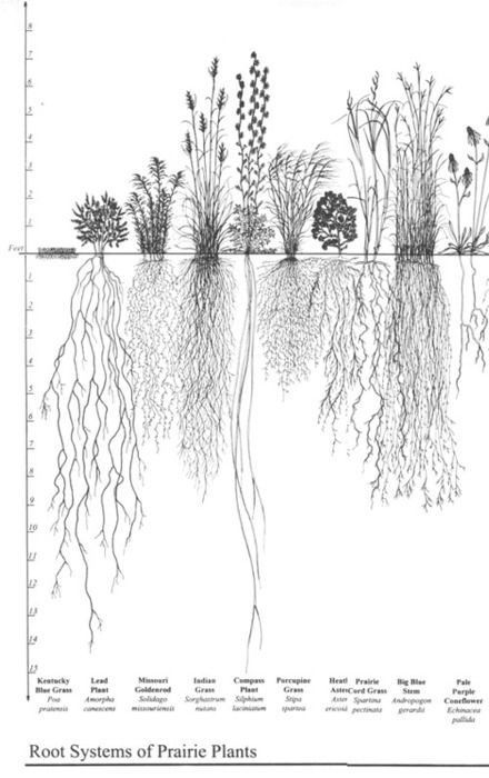 Drawn roots On Pinterest Biology/Taxonomy  system