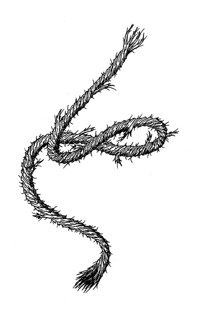 Drawn rope frayed rope New Rope Search drawing rope