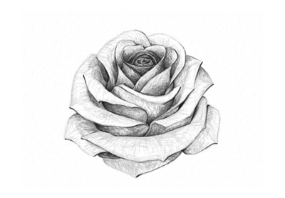 Drawn rose Draw a to  Rose