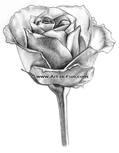 Drawn rose A a is Draw to