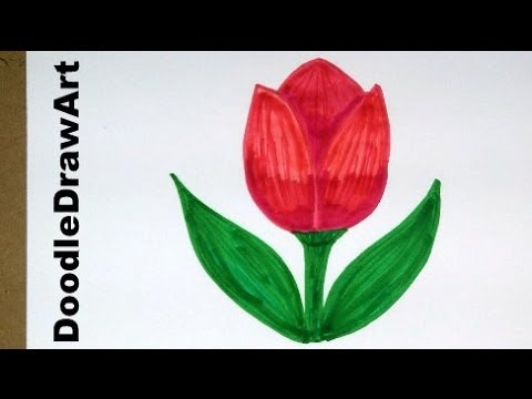 Drawn rose 11 year old Tulip Drawing: How Drawing: Cartoon