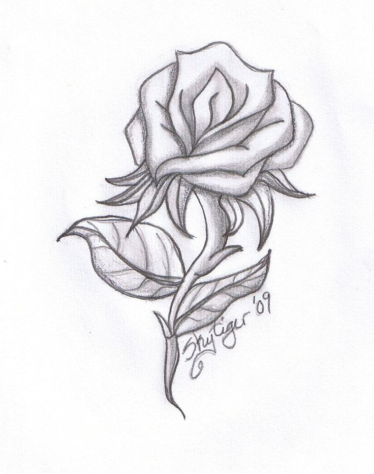 Drawn rose 11 year old Rose awesome Drawing 20+ awesome