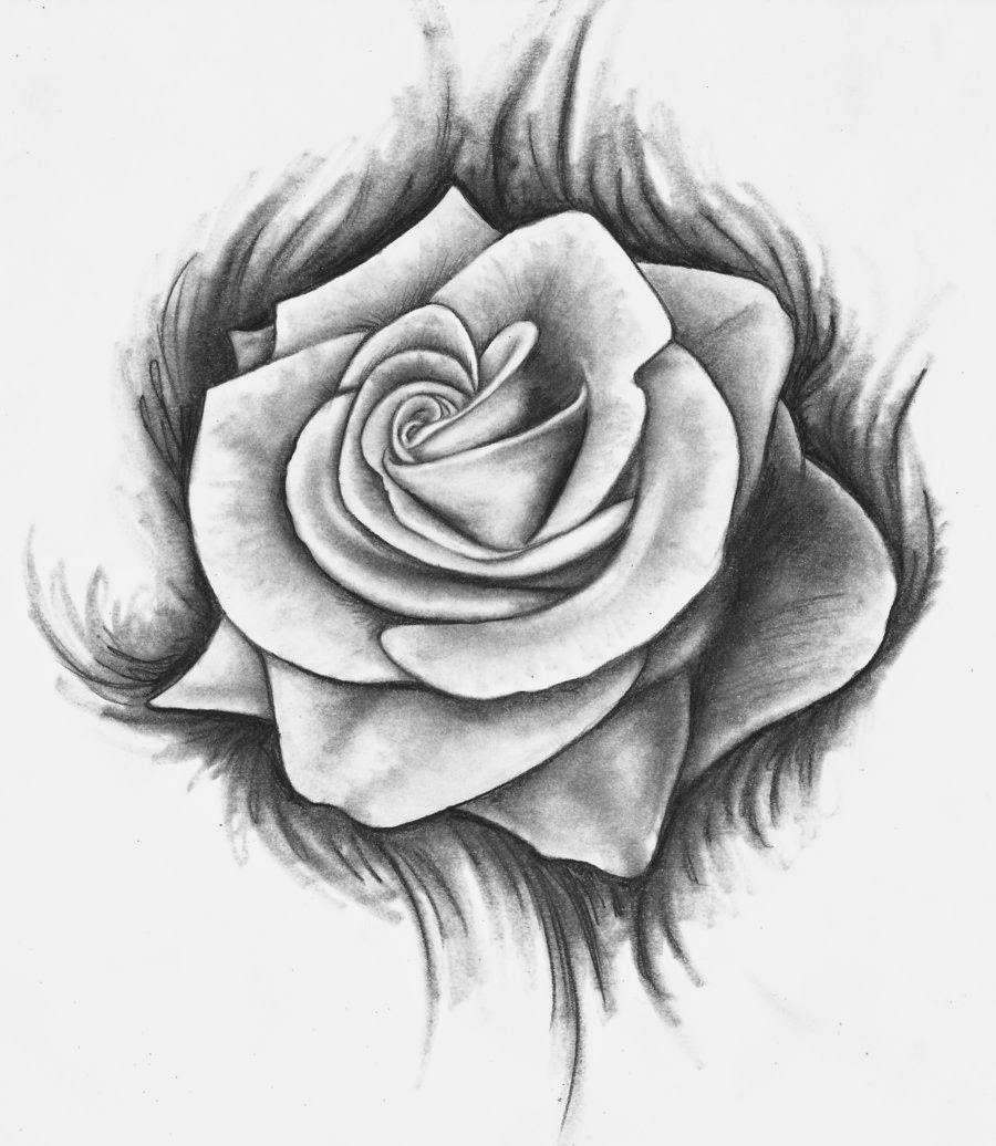 Drawn rose Rose How For Rose A