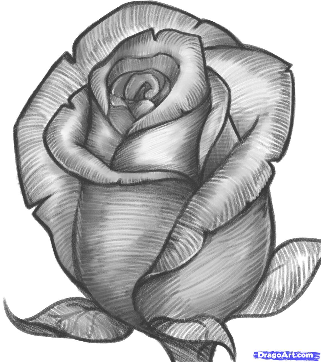 Drawn red rose dragoart A Bud Culture Rose Pop