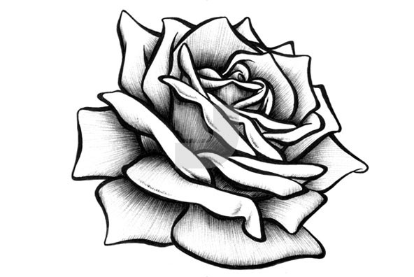 Drawn rose ATq65oKrcjpg Drawn Page Easy Roses