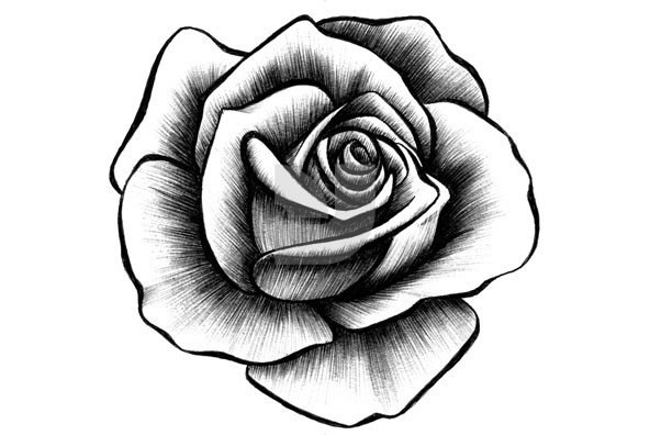 Drawn rose RcdRxkGMijpeg Drawn Page Easy Roses