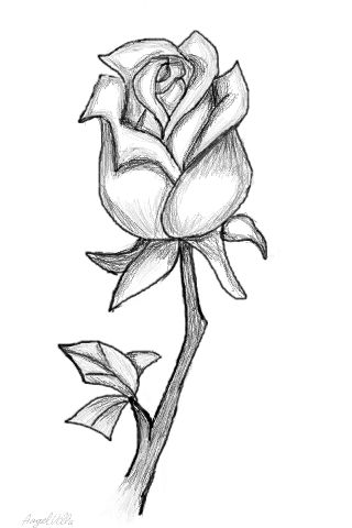 Drawn rose 07b19cf04bb3666d91162cbdb5098e09jpg Drawn Page Easy Roses
