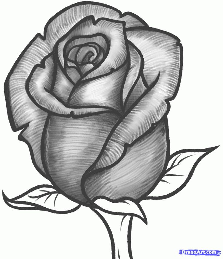 Drawn rose A step Pinterest bud 25+