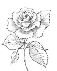 Drawn rose To Factory Drawing How to