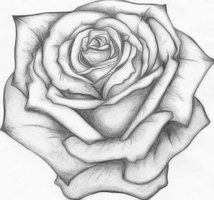 Drawn rose anime 1 year images 252 best