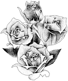Drawn rose artistic Best on roses images Drawing