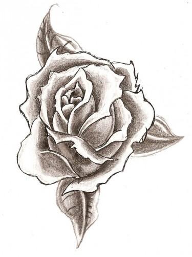 Drawn rose artistic Pencil Flowers Drawings Flowers Of