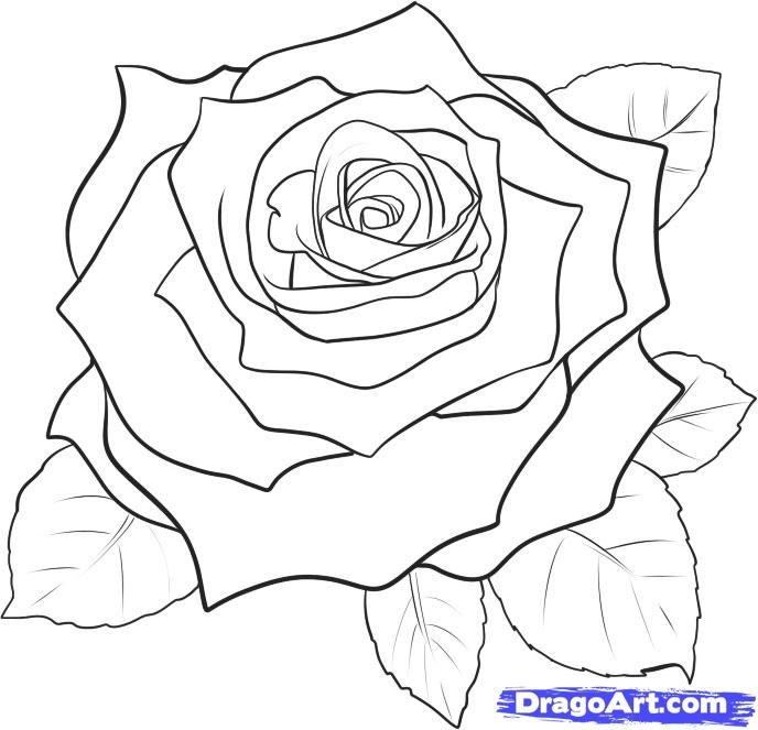 Drawn red rose real rose Draw a How Realistic rose