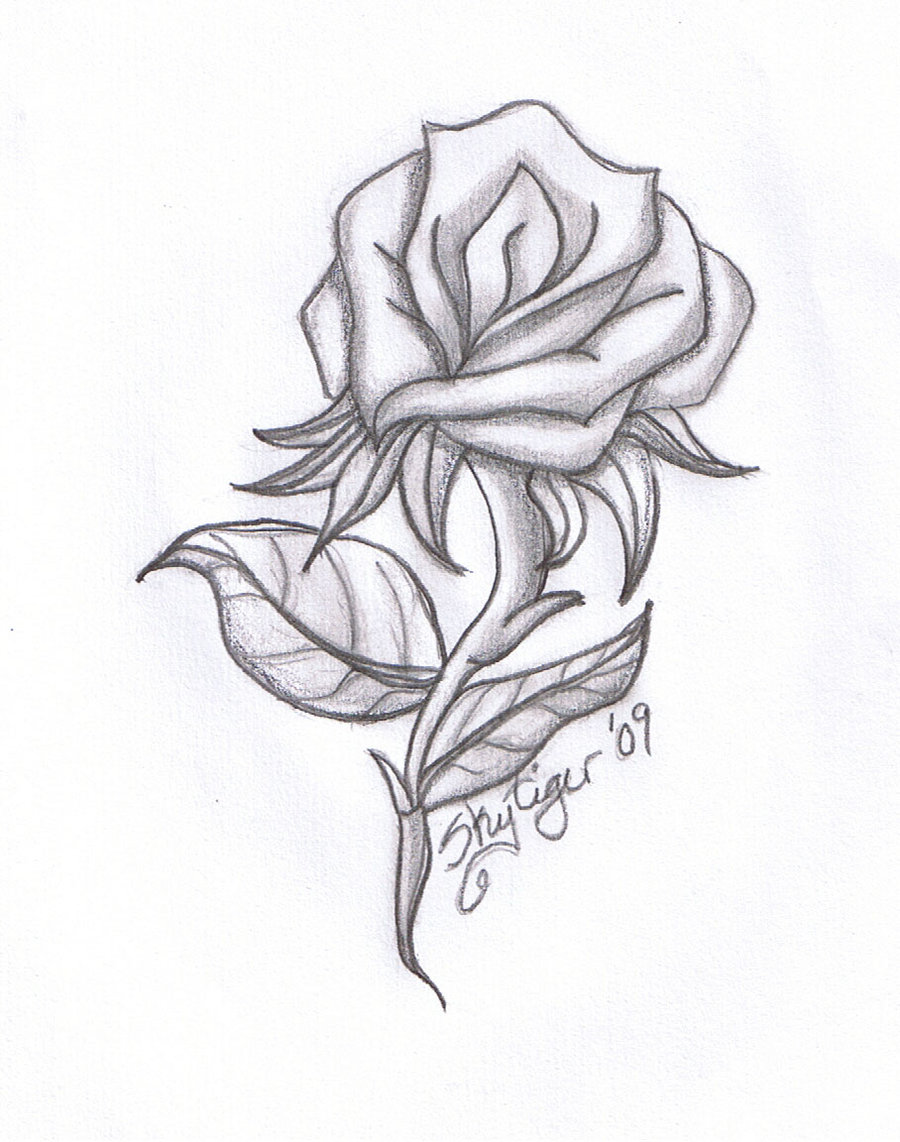 Drawn rose artistic Drawings by Cool skytiger other