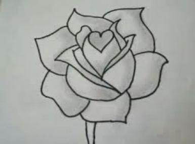 Drawn rose bush fancy Flower ideas / Best Pinterest